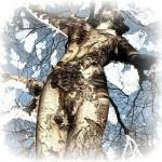 femme-arbre4