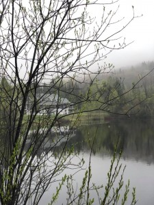 rotary brume printemps arbres